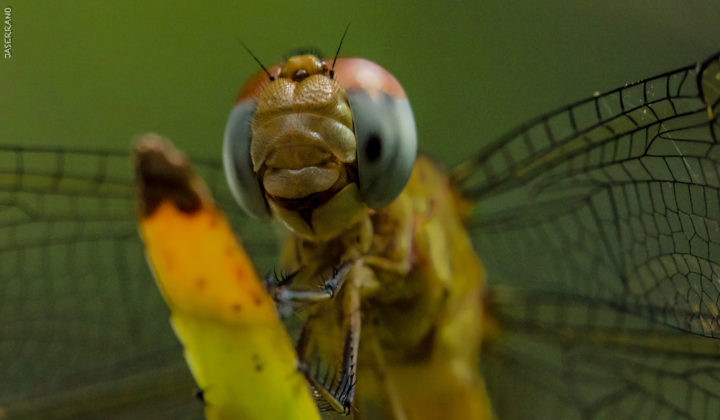 posando-mi-pana-the-dragon-fly-1
